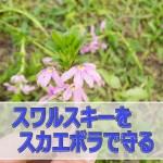 20160608-R0000133_ai
