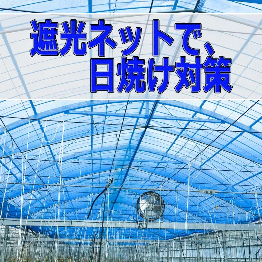 20160617-IMG_1863_ai