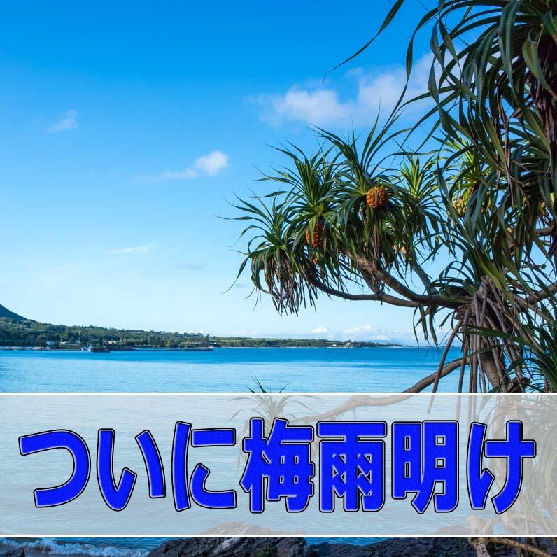 奄美地方「徳之島」では「梅雨」が明け、濃いブルーの海となってきました! | 花徳マンゴー
