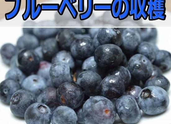 20160620-DSC_3749_ai