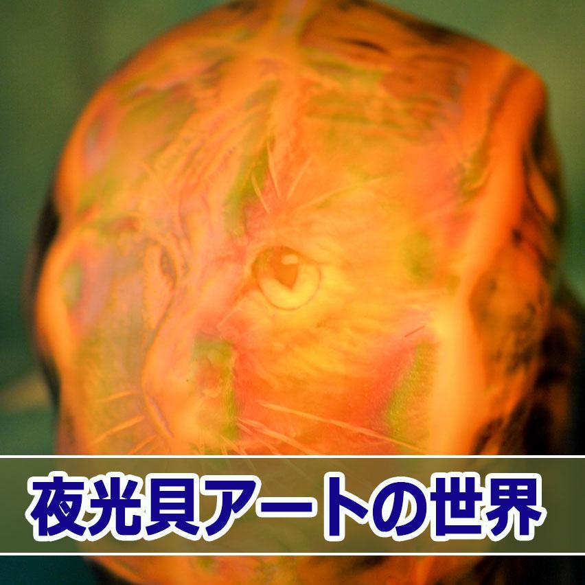 20160625-DSC_3823_ai