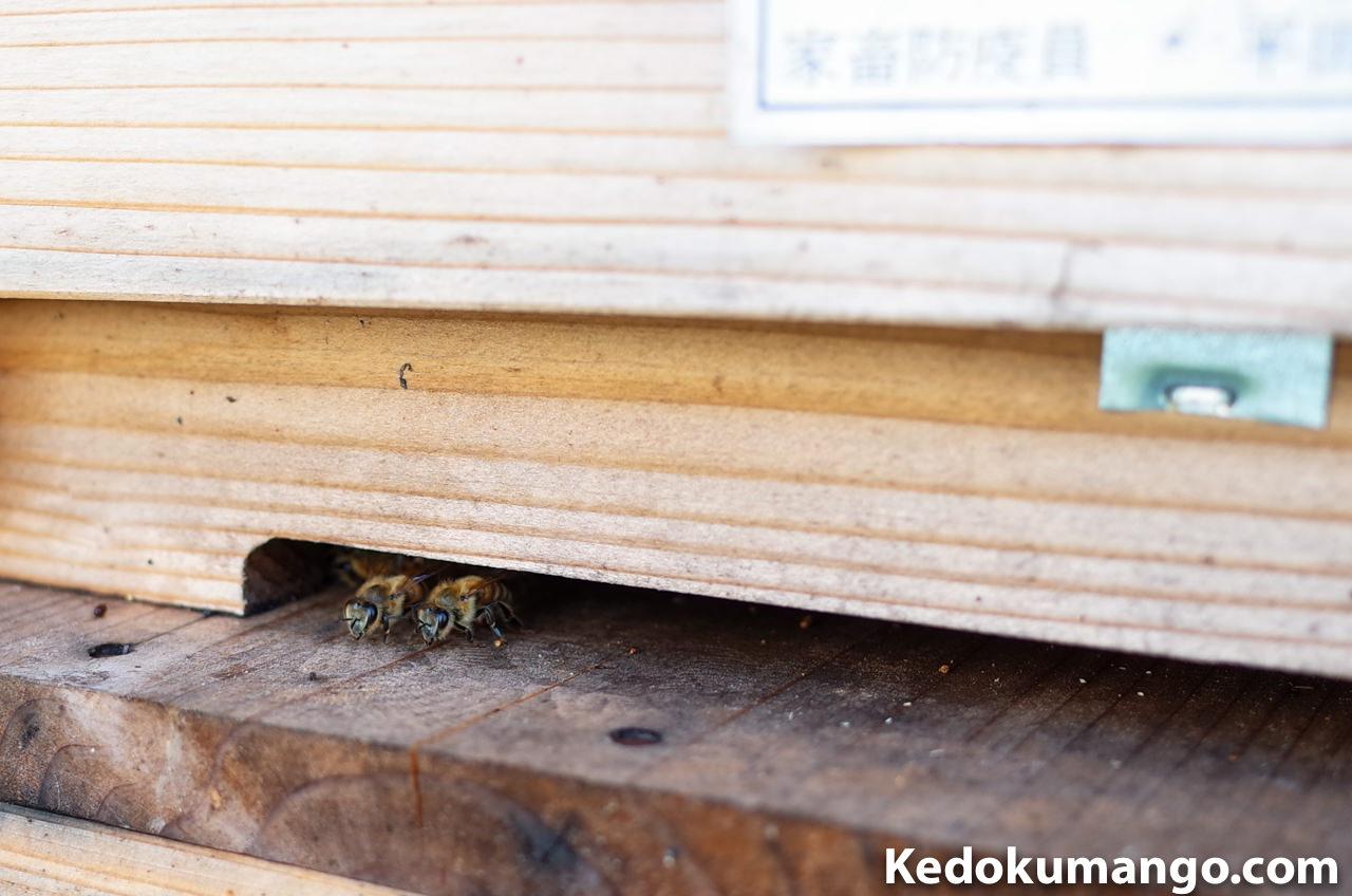 蜜蜂の巣箱の巣門の様子