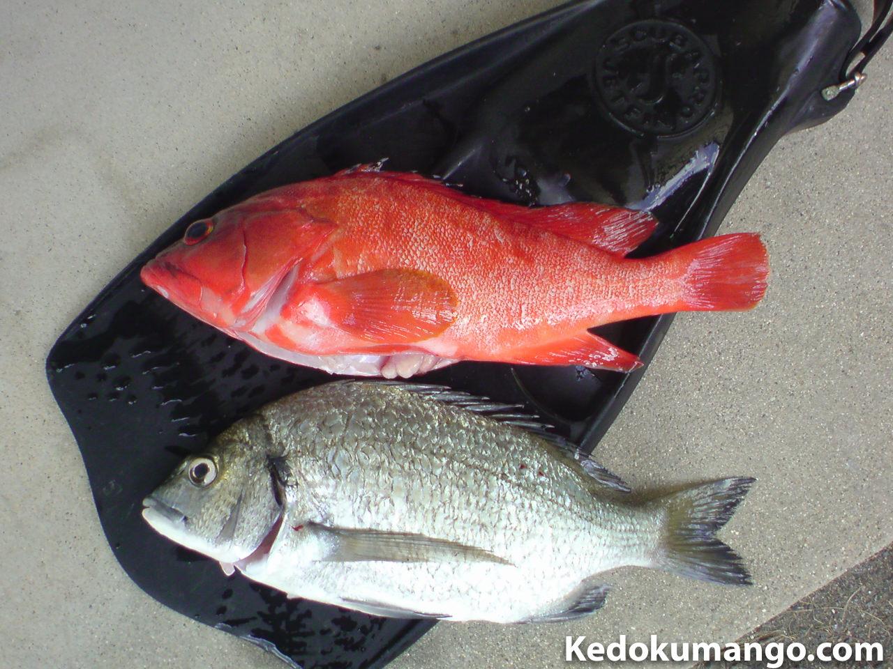 徳之島の海遊びで突いた魚