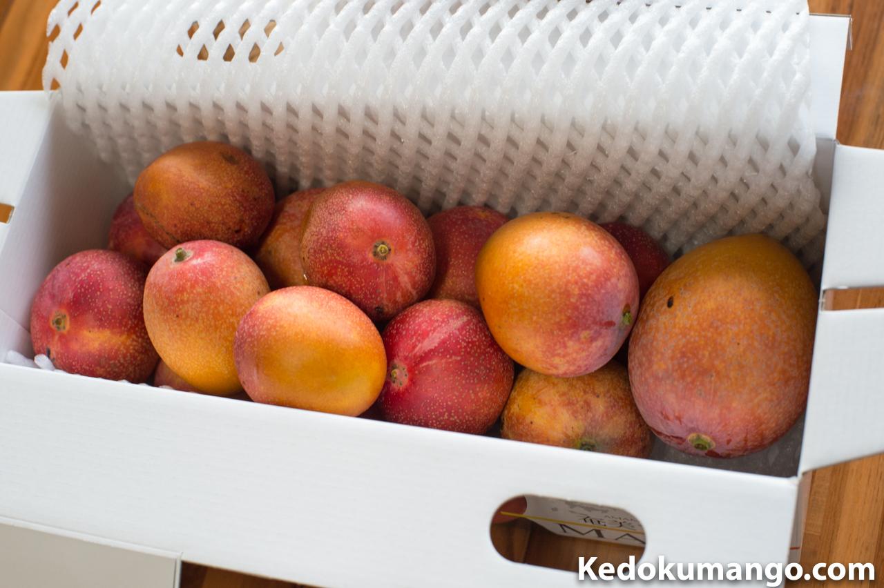 ミニマンゴーを箱詰めした様子
