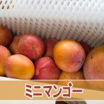マンゴージャンキーは知っている!超絶に美味い【ミニマンゴー】