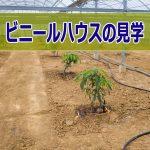 【マンゴーに夢を乗せ】新しいビニールハウスでスタートをきった栽培施設を見学してきた!
