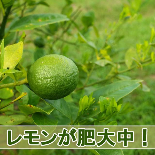 20160705-R0000566_ai