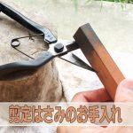 マンゴー農家が教える【剪定ハサミ】の手入れ&研ぎ方