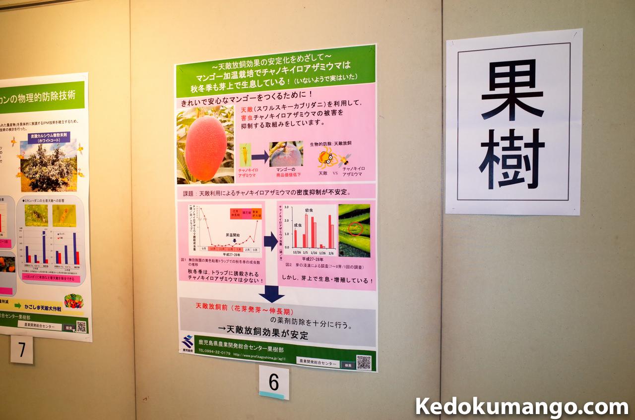 研究成果発表会でのマンゴーのポスター