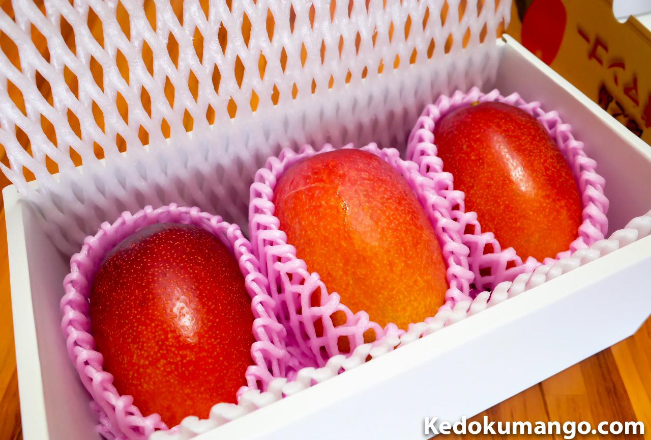 マンゴーを箱詰めした様子