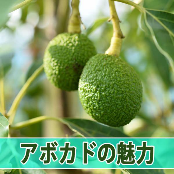 20160724-DSC_4955_ai