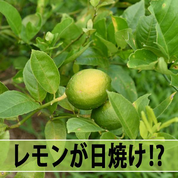 20160730-DSC_4996_ai