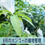 20160804-DSC_5085_ai