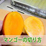 マンゴー農家が教える上手な【マンゴーの切り方】
