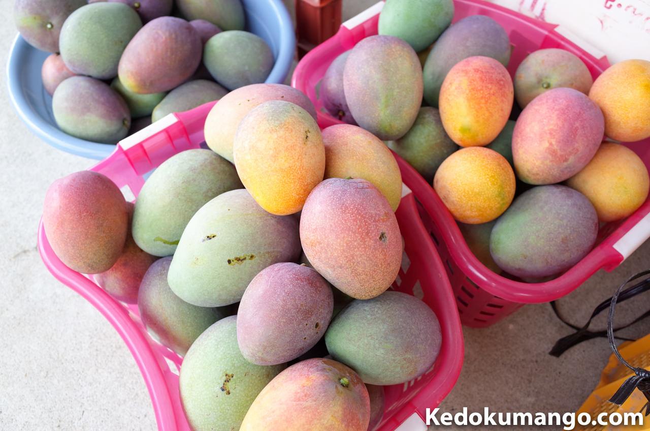 緑色のまま収穫したマンゴー
