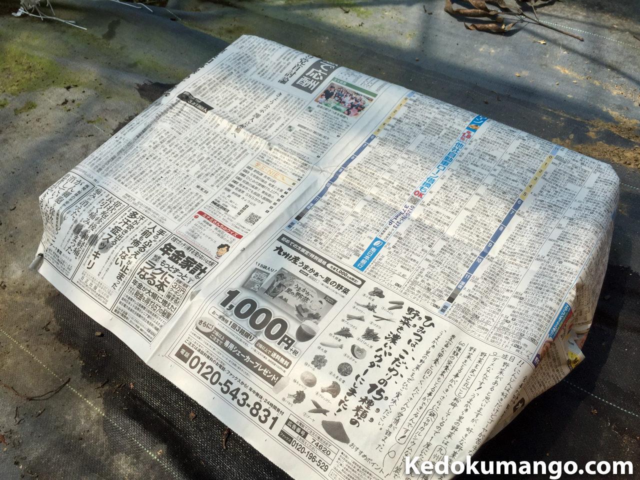 育苗床と古新聞