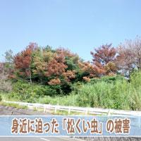 【松くい虫】徳之島の山がなくなる!? | 花徳マンゴー