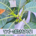 20160826-DSC_5399_ai