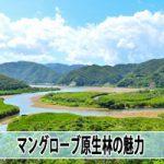 【奄美大島観光】奄美市住用村にある「マングローブ原生林」に行ってきたよ!