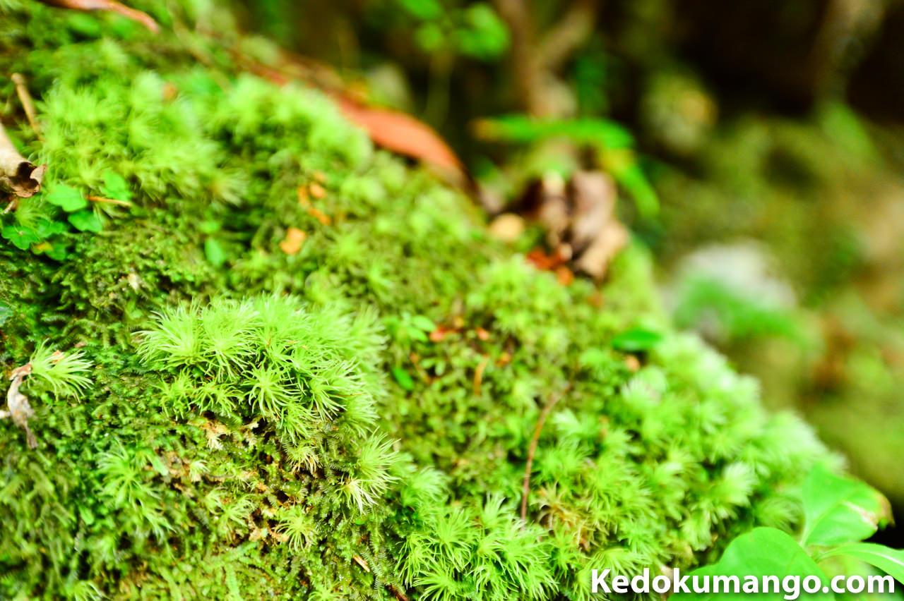 マテリヤ滝で撮影した苔