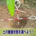 【マンゴー栽培】植物栽培において「土壌診断試験」で土の状態を調べよう!