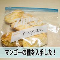 【マンゴー栽培】ハワイからマンゴーの種が届いたよ!! | 花徳マンゴー