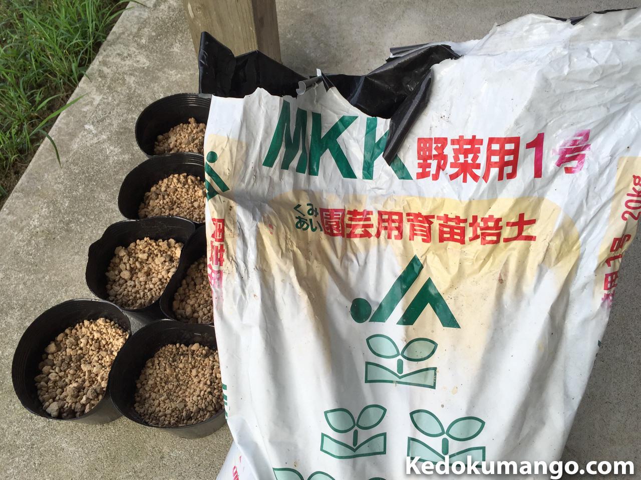 マンゴーの種を植えた育苗培土