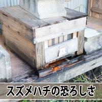 【ミツバチ飼育】ミツバチの天敵「スズメバチ」がやってきた! | 花徳マンゴー