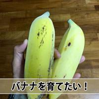 【熱帯果樹】南国「徳之島」でバナナを育てたいと感じてきたぞ! | 花徳マンゴー