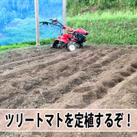 【ツリートマト】種から育てている「ツリートマト」を定植しました! | 花徳マンゴー