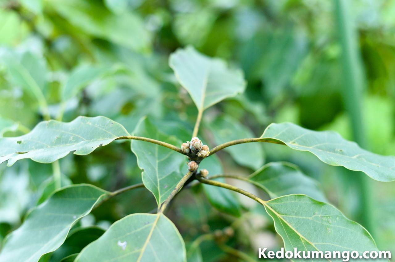 アボカドの新芽の課題