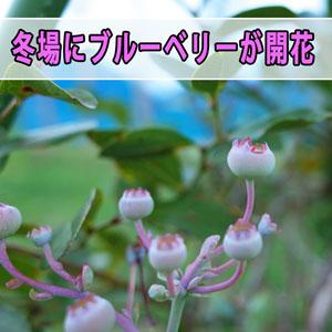 20161115-r0001426_ai