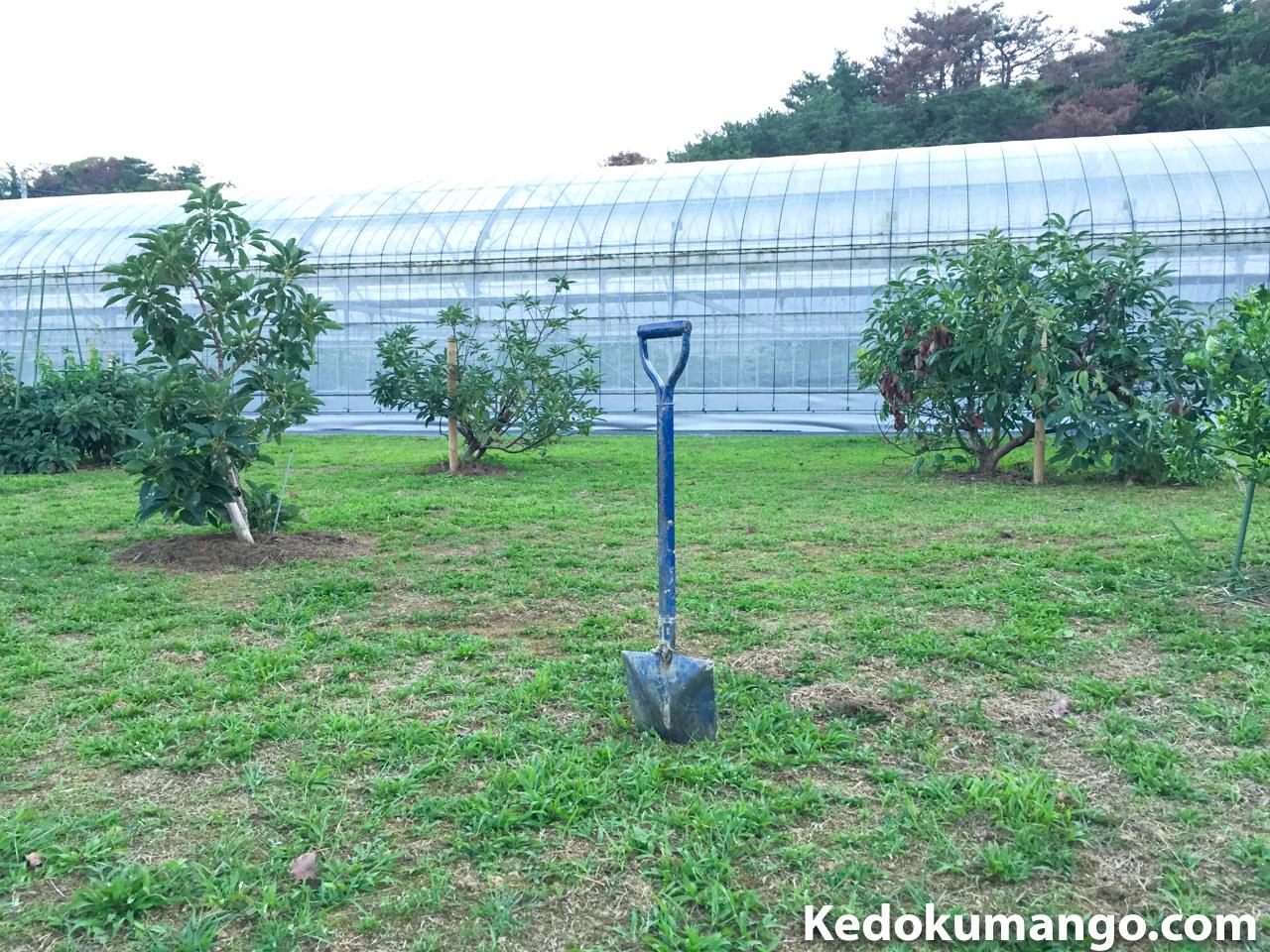 アボカドを定植する場所