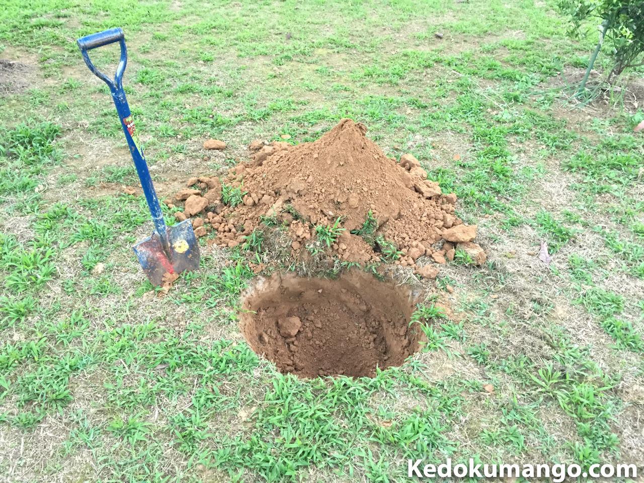 アボカドを植え付ける穴