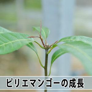 20161117-dsc_6068_ai