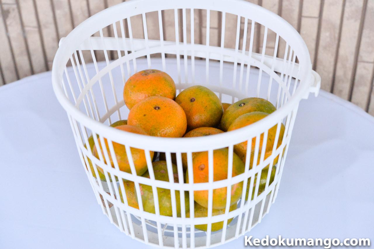 収穫したオレンジ