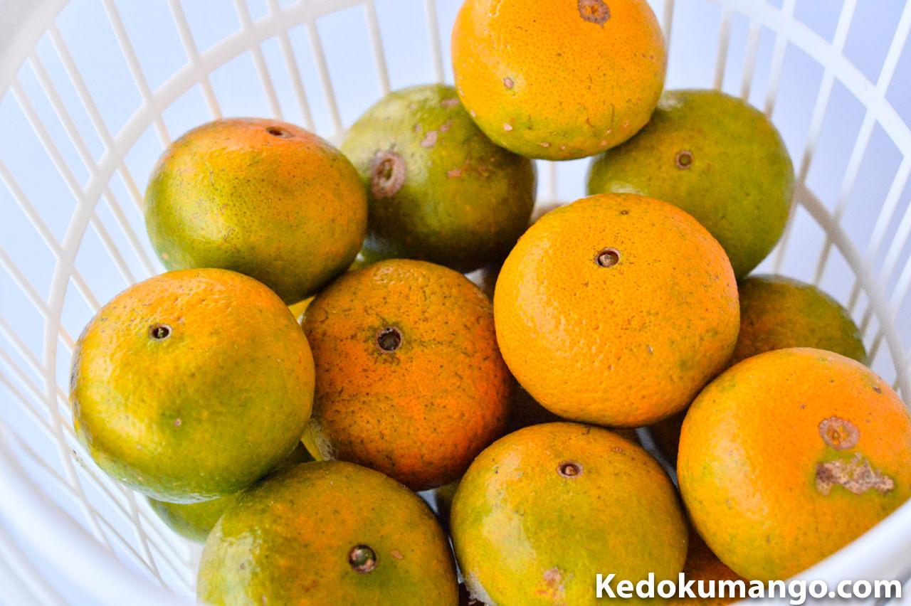 収穫したオレンジの果実の接写
