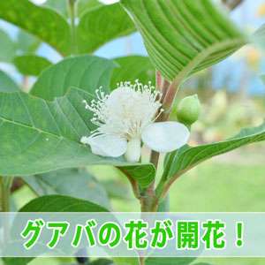 20161118-dsc_6092_ai