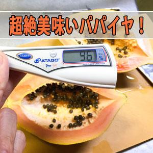 【パパイヤ】「徳之島」で育った『フルーツパパイヤ』が超絶に美味いので紹介するよ! | 花徳マンゴー