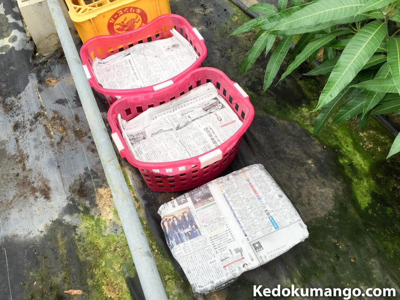 ポット鉢に新聞紙をかけたところ