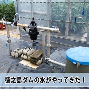 農業用水として建設された【徳之島ダム】の水がやってきた!   花徳マンゴー