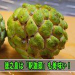 【熱帯果樹】甘くて美味しい[釈迦頭(しゃかとう)]って果物を知っていますか!?