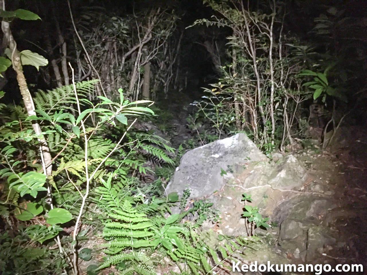 井之川岳の登山道