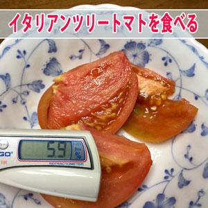 【ツリートマト】を初収穫することができたので糖度などについて紹介するよ! | 花徳マンゴー