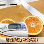 【柑橘栽培】徳之島で育てたみかんのようなオレンジの『はれひめ』が初収穫です!