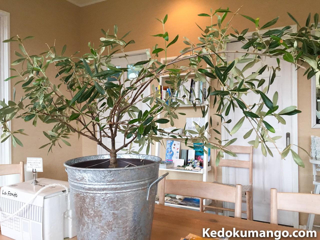 「Lafonte(ラフォンテ)」店内の植物