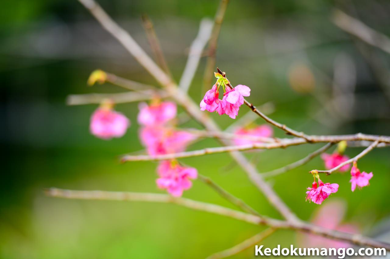 ピンクの花と緑