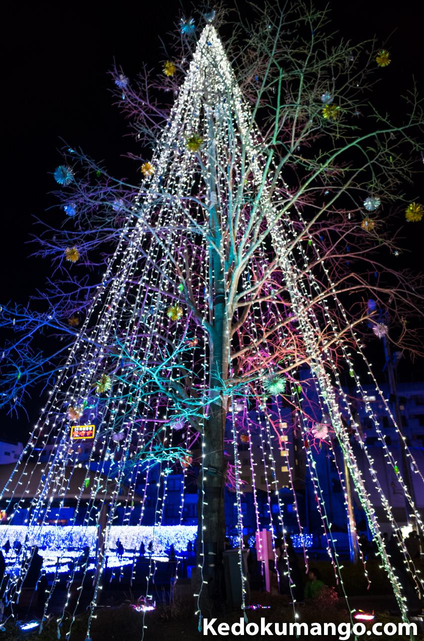 樹木のライトアップ