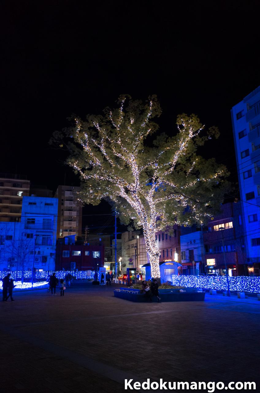 手の込んだ樹木へのライトアップ