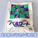 【マンゴー栽培】「炭疽病」と「灰色かび病」対策として消毒作業を行いました!